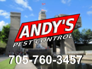 Peterborough Pest Control